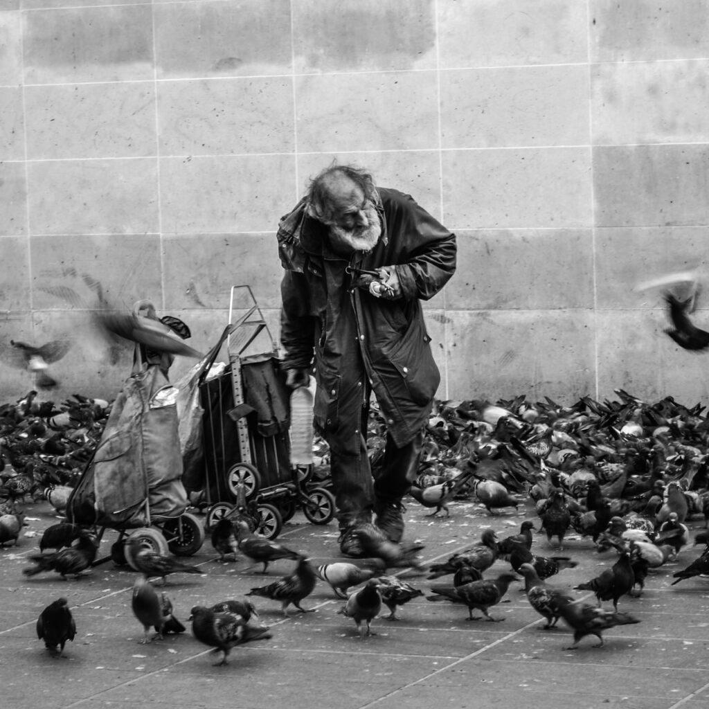 Un solitaire parmi les oiseaux