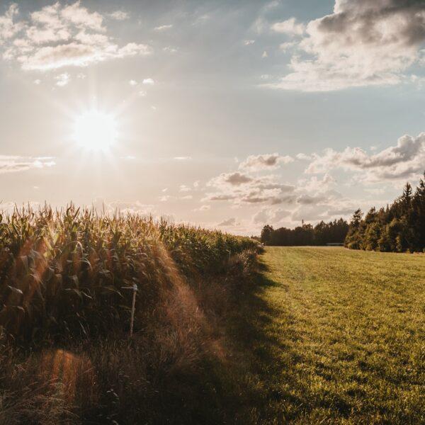 Un soleil de poème aide à la guérison